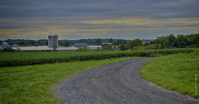 Franklin Hill Vineyard